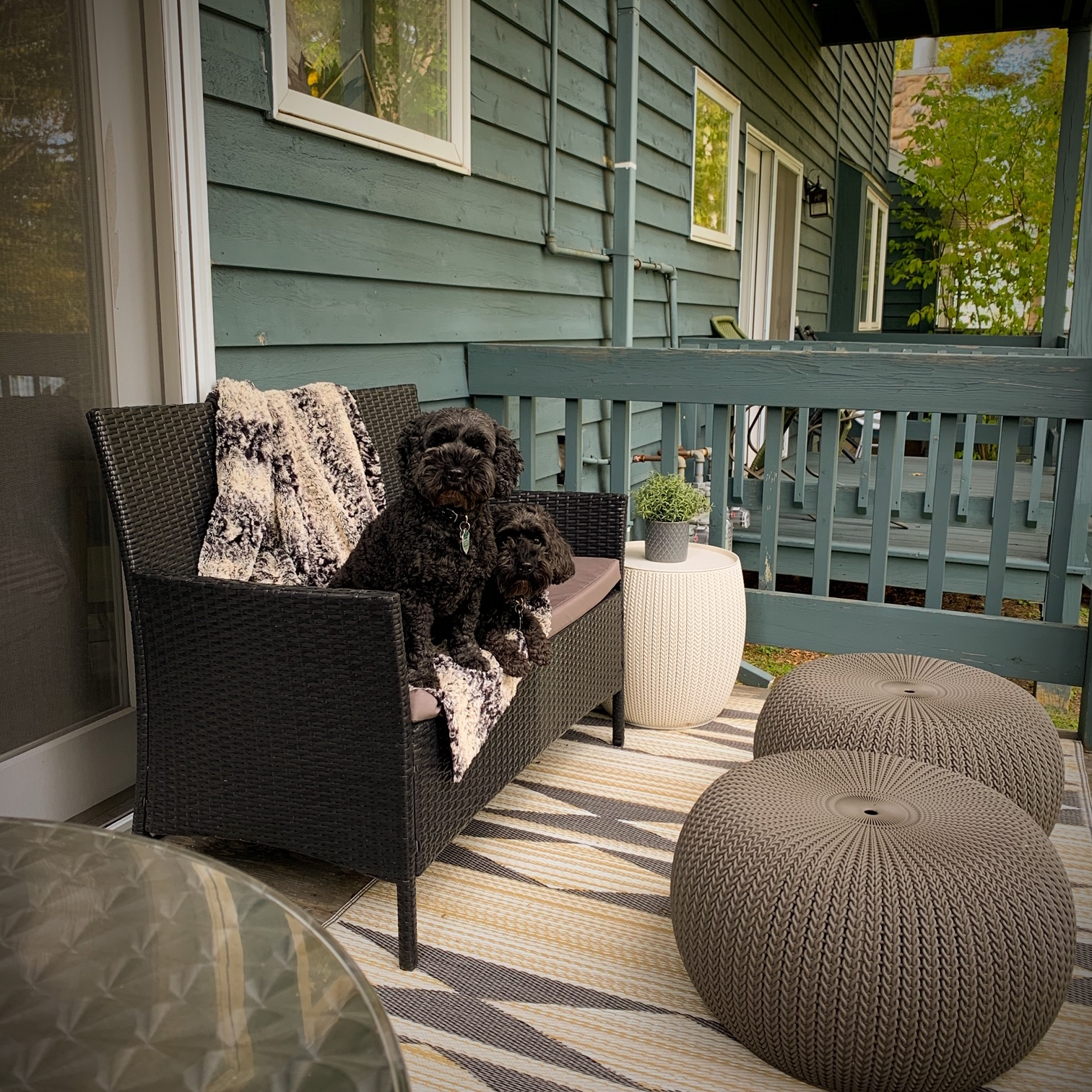 Dog friendly deck